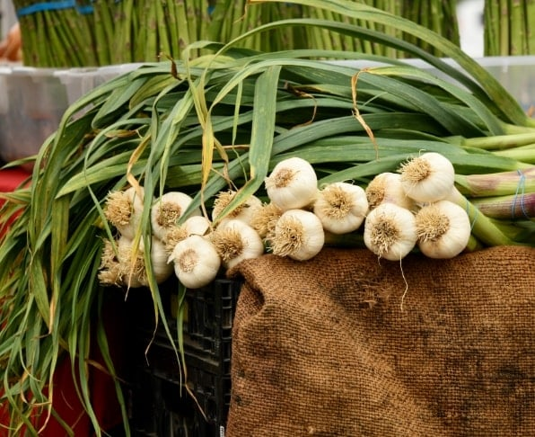 WHERE TO LOOK FOR GARLIC FLAKES SUPPLIERS IN TODAY'S EGYPTIAN MARKET